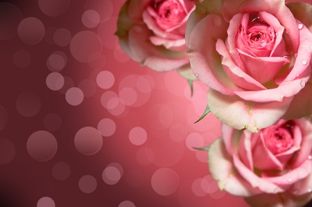 Photo of roses on decorative background for design