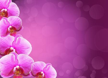 orchidee: Orchid confine fiori con copia spazio