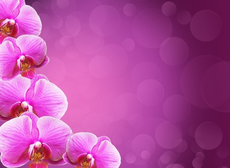 Orchid flowers border with  copy space Stock Photo