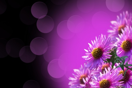 background of purple wild flowers to the bokeh Stock Photo