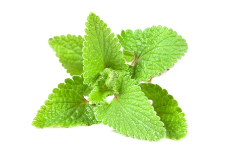 lemon balm: Fresh lemon balm leaves isolated on white background Stock Photo