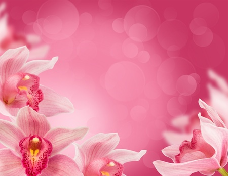 floral background with tropical orchids for the design photo