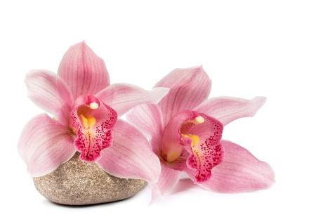 tropische Orchidee mit einem Stein ein Spa auf weißem Hintergrund