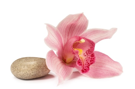 tropical orchid with a stone for a spa on a white background
