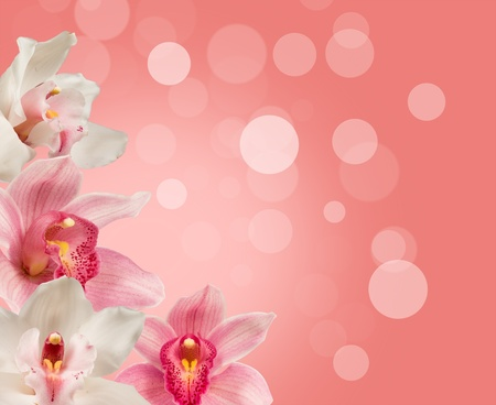 background for the design of tropical orchids Stock Photo - 13293336