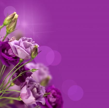 ramo flores: m�gicas flores de color p�rpura con un espacio de la copia Foto de archivo