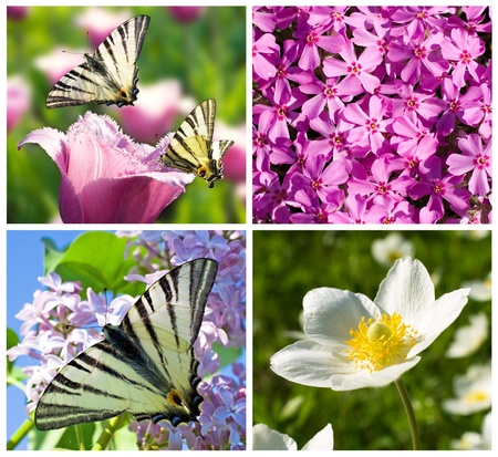 close-up beautiful lilac and white  flowers and butterflies photo