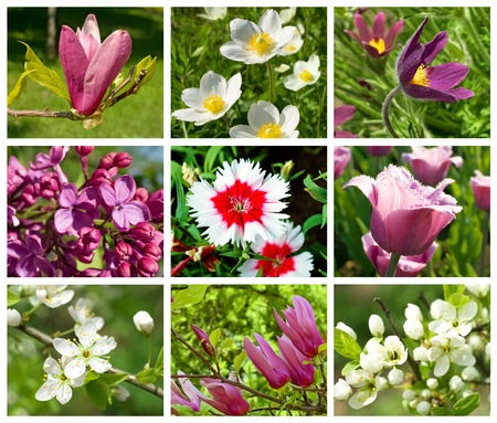 collection  of different spring flowers for gardening photo