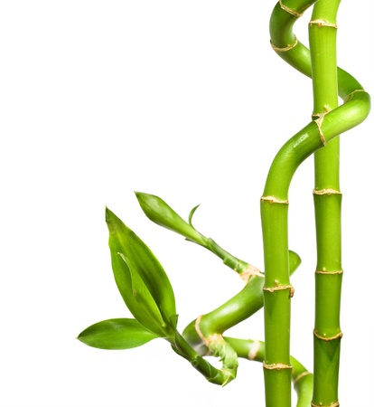 Spa. decorative bamboo on a white background