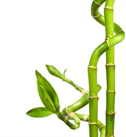 Spa. dekorativen Bambus auf weißem Hintergrund Standard-Bild - 14007831