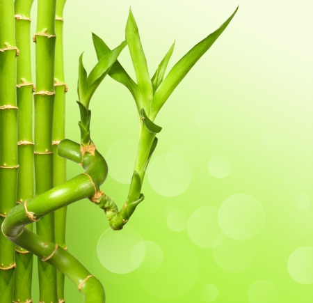 Green bamboo background with copy space  photo