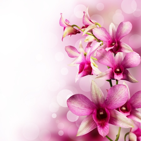 background with tropical orchids for the design
