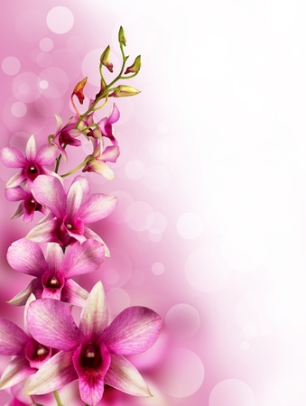 background with tropical orchids for the design photo