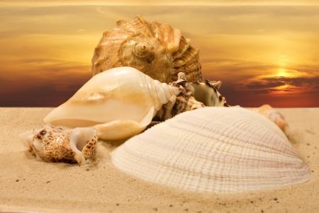 coastline with sea shells at sunset