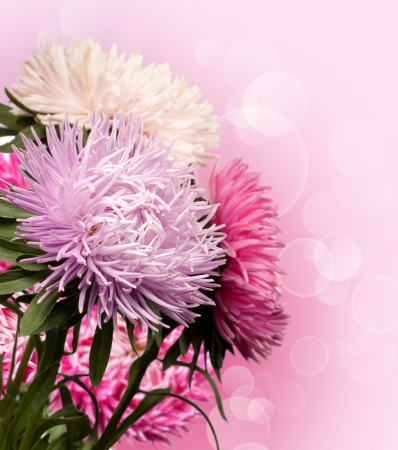 background with a bouquet of asters photo