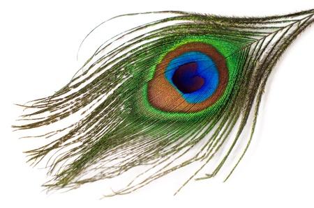 pluma blanca: pluma de pavo real aislado en un fondo blanco Foto de archivo