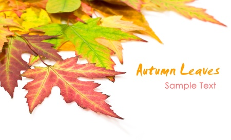 autumn leaves on a white background with copy space photo