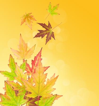 抽象的な背景に秋を葉します。 写真素材