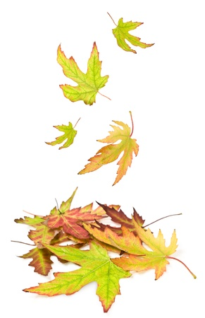 heap of autumn leaves on a white background photo
