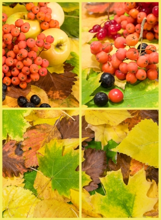 set with autumn leaves and fruits photo