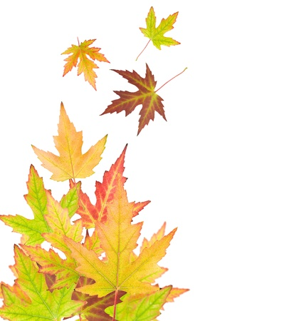 abstract background with autumn leaves   photo