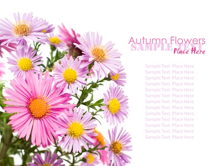 bouquet of asters on a white background photo