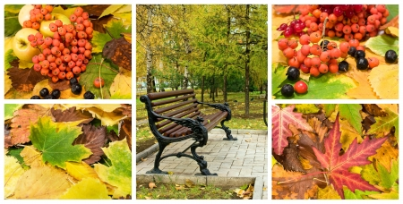 mountain cranberry: autumn set in the landscape and backgrounds