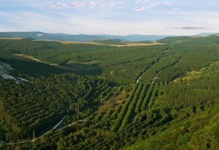 birds eye: hilly landscape in the summer with a birds eye