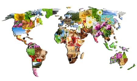 白い背景の上の多くの写真の世界のマップ