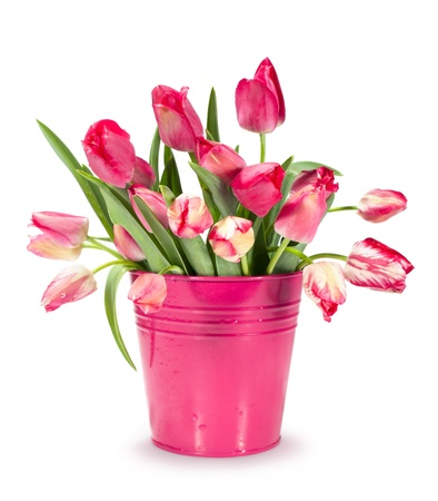bouquet of red tulips in a bucket isolated on white