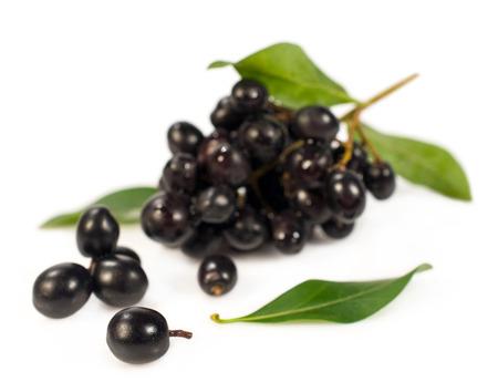 black elderberry twig isolated on white photo