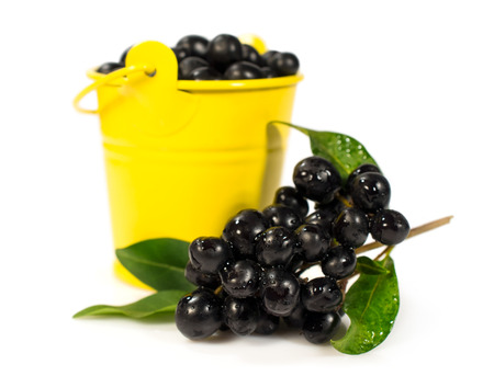 berries of black elder in a yellow bucket isolated on a white background 写真素材
