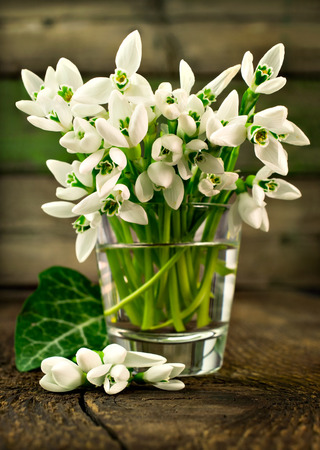snowdrops in the glass on a wooden