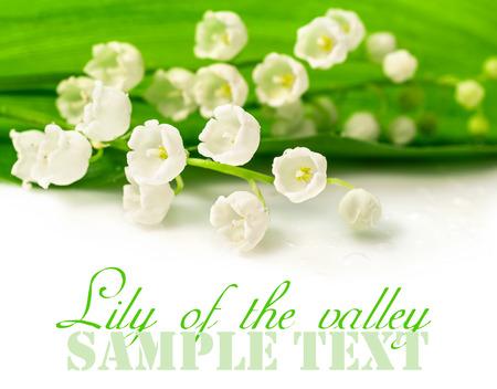 Maiglöckchen Nahaufnahme auf weißem Hintergrund Standard-Bild - 28093867