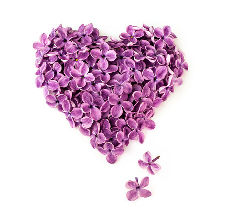 Flowers of a lilac in the form of a heart isolated on a white