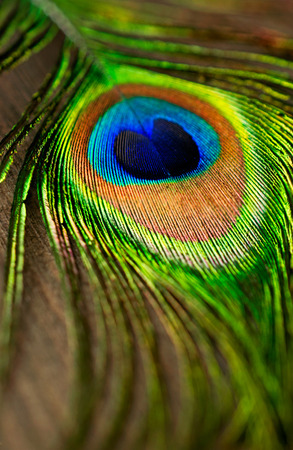 peacock eye: Abstract  Background Peacock Feathers