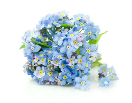 白で隔離ワスレナグサの花の花束 写真素材