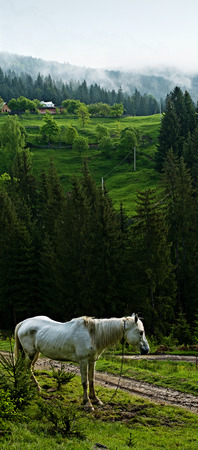 Summer landscape in the mountains with a horse