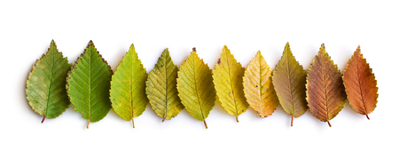 Collection of multi-colored fall leaves