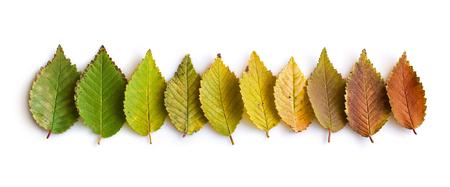 Sammlung von bunten Blätter fallen Standard-Bild