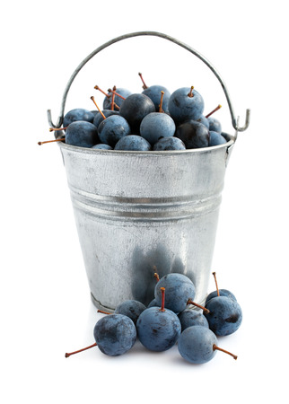 astringent: Blackthorn in a bucket isolated on white Stock Photo