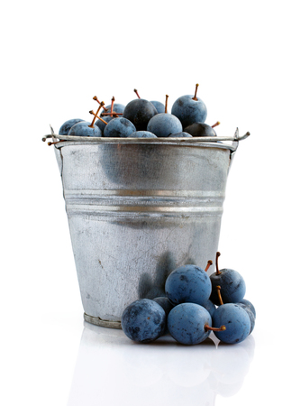 astringent: Blackthorn in a bucket isolated on a white