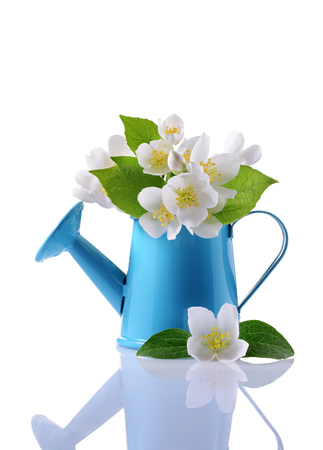 Bouquet of white jasmine flowers with leaves in blue watering can isolated on white background Stock Photo
