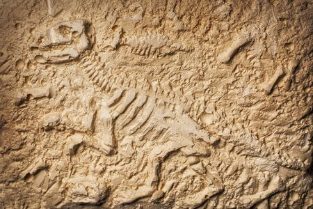 Archaeological and paleontological find of dinosaur fossil on stone background