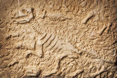 Découverte archéologique et paléontologique d'un fossile de dinosaure sur fond de pierre Banque d'images