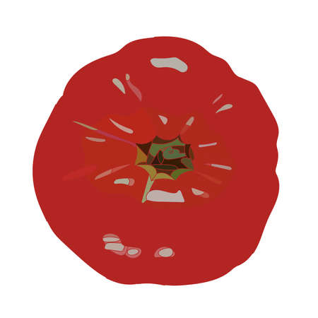 realistic red tomato vector art. Isolated in white