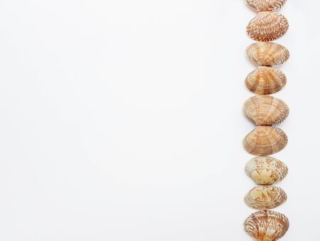 Sea washed vongole shells on a white background. High quality photo