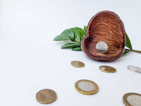 Belarusian coins on a white background made of alloy of metals and copper. Against the background of brown dried flower and green leaves. Belarus, ruble, is written on the coin in Belarusian. High quality photo