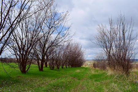 Country road with flowering trees on the sides of the spring.