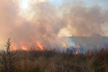 Ignition of dry grass and reeds near residential buildings.